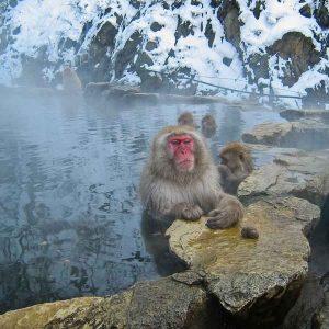 สวนลิงจิโกคุดานิ แช่น้ำ